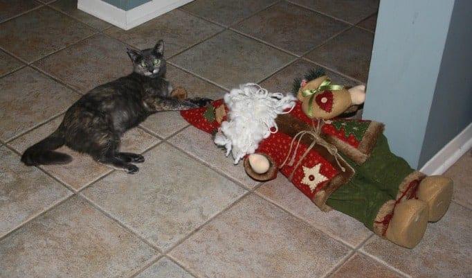 misbehaving cat