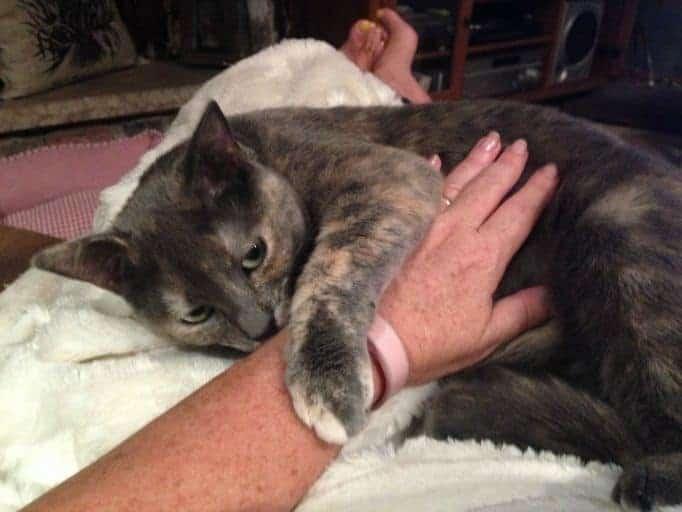 snuggle puss