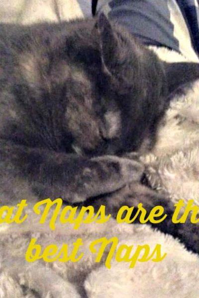 Cat Naps are the Best Naps