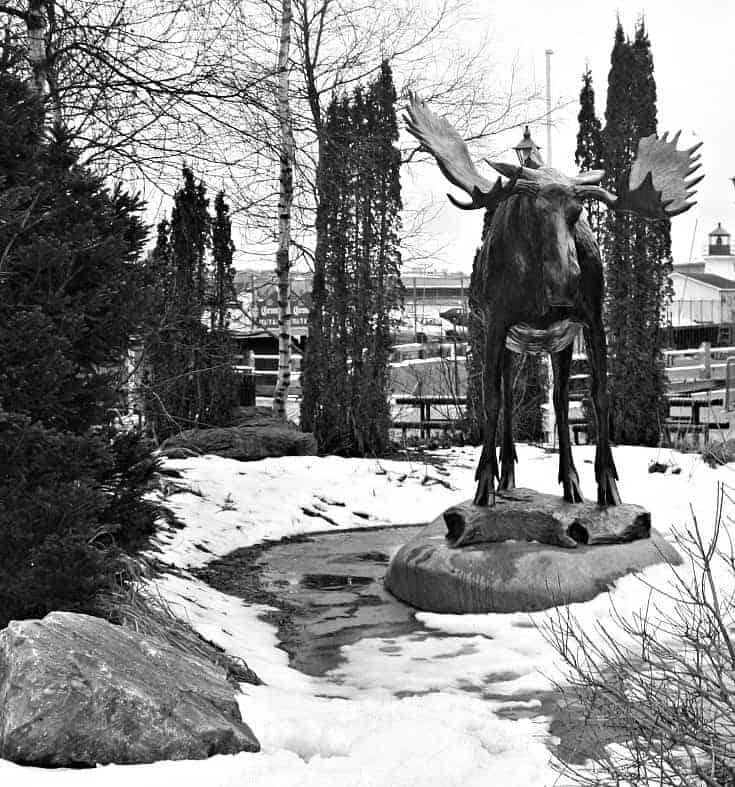 Uptown Saint John New Brunswick,moose