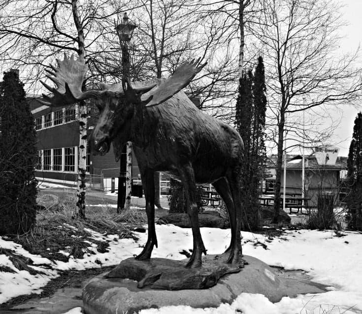 Uptown Saint John New Brunswick, moose