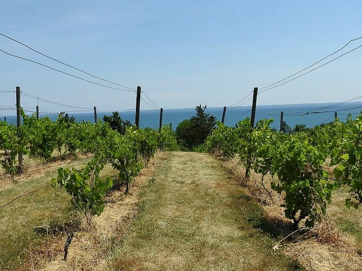 view-from-county-cider-tasting-room