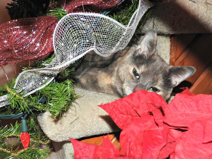 a fun cat Christmas from #mynameislou