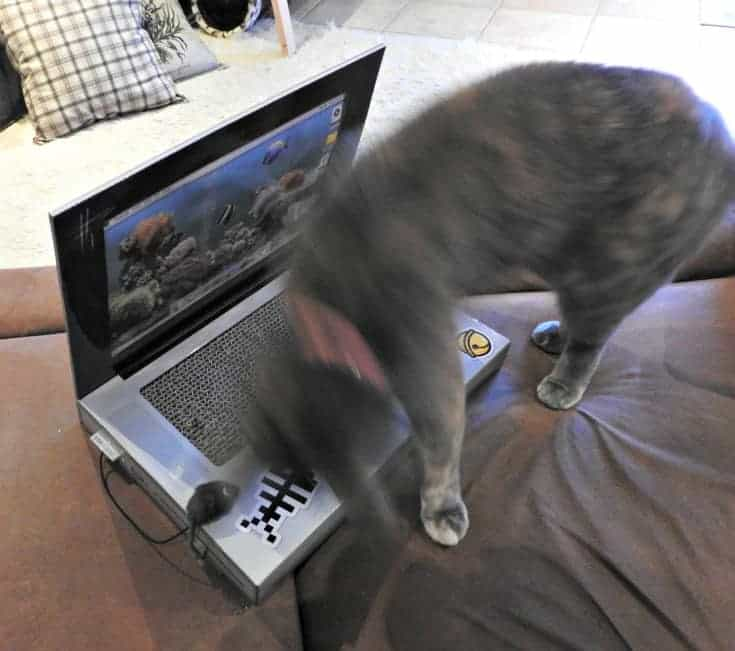 cat blogging