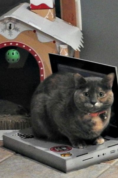 Lou the Cat and her Cat Laptop