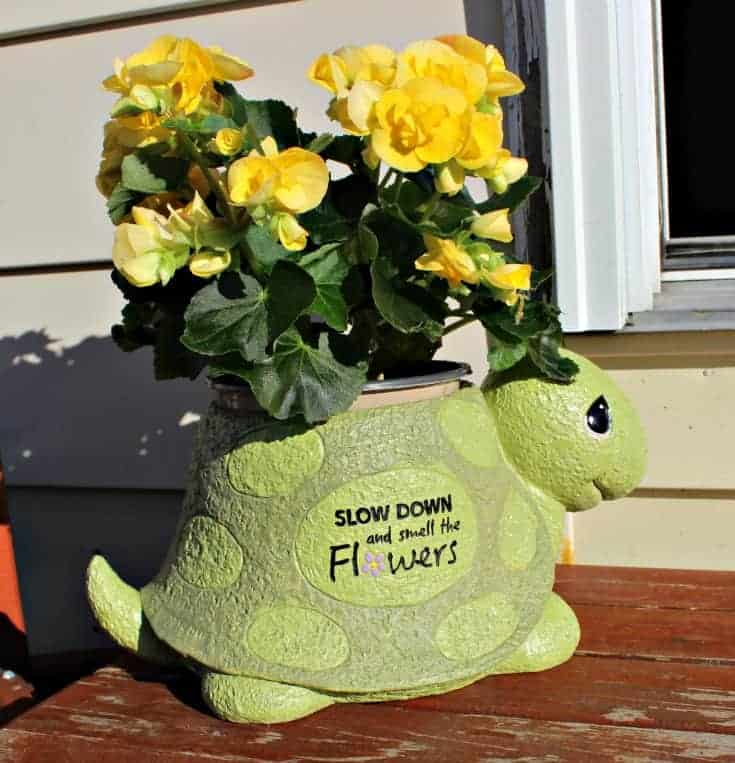 begonias in Precious Moments Garden Collection
