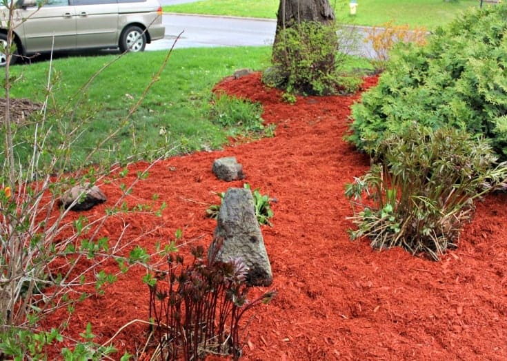 front yard renovations with red cedar mulch