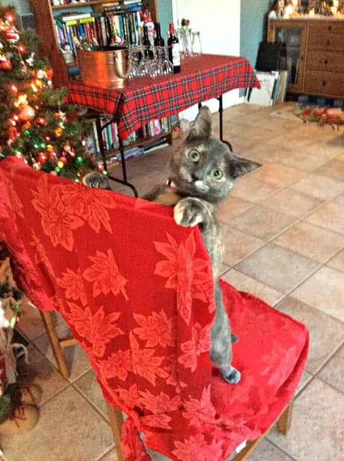 cat play and behaviour