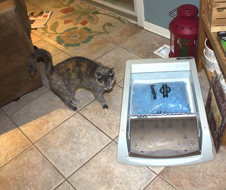 Lou examining her new litter box
