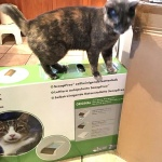 cat and litter