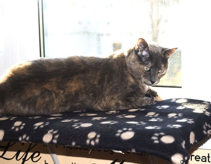 Lou is enjoying her portable window ledge