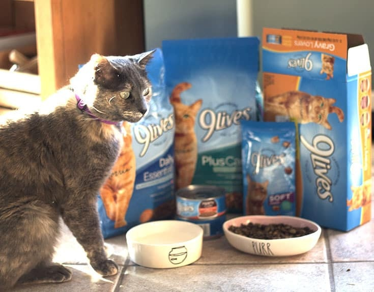Lou and her 9lives treat selection #morrisknowsbest