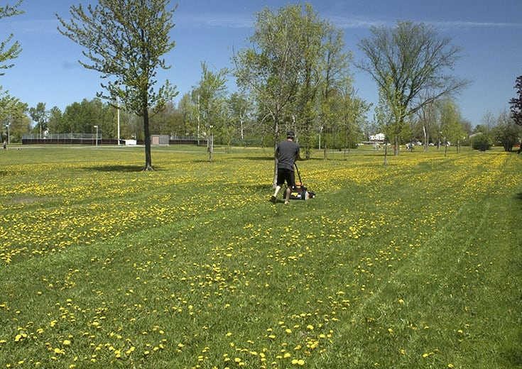 using the Columbia mower to create the bocce court