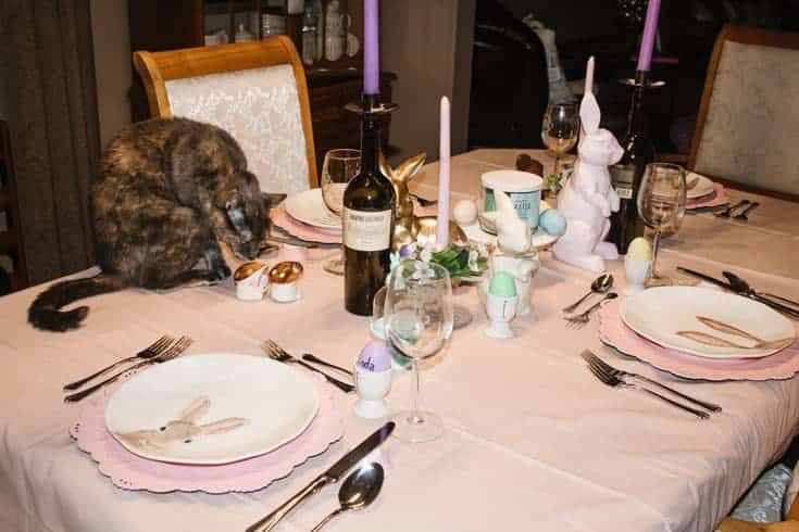 cat on the easter table