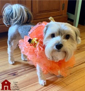 loofah puppy costume