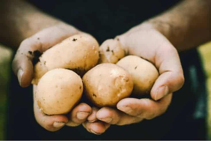 fistful of potatoes