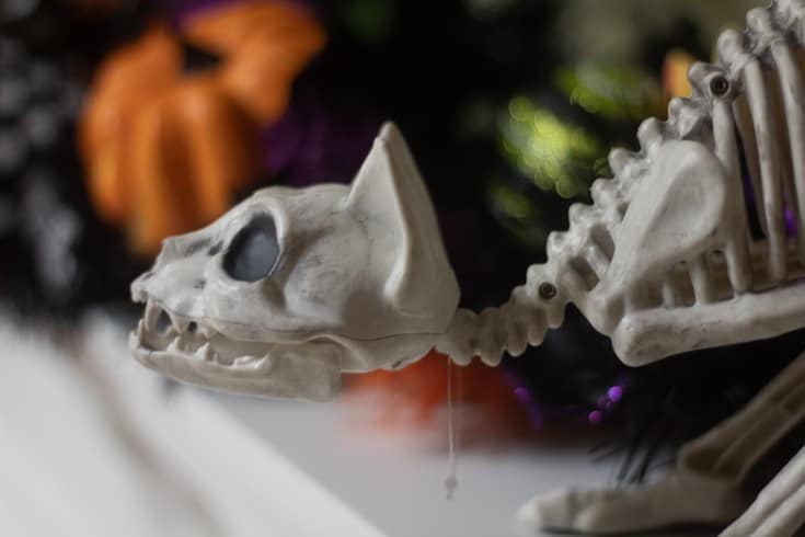 cat head on the halloween mantle
