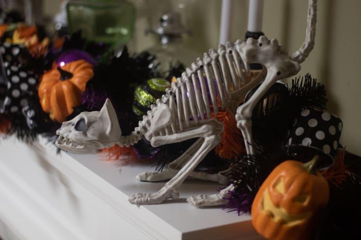hissing skeleton cat
