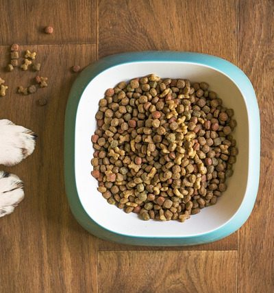 5 Practical Ways to Give Your Dog Healthy Food