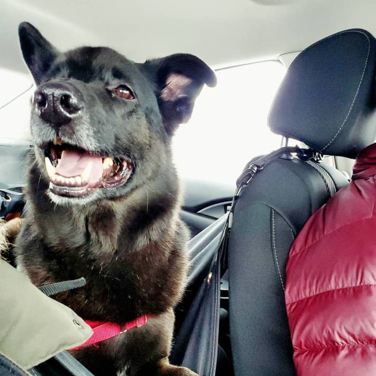 road trip with the dog